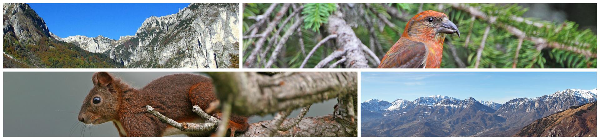 Trekking, passeggiate, Natura, Storia